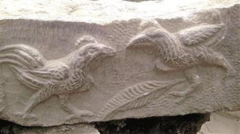 laodicea-excavations-roosters
