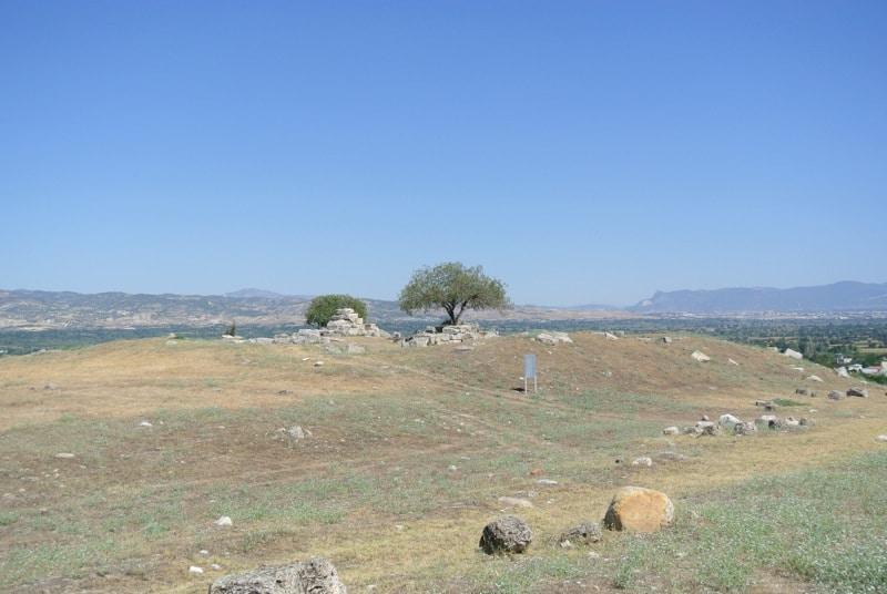 laodicea-tree