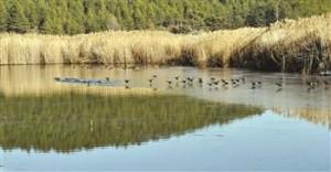Denizli is going to rescue its Yayla Lake